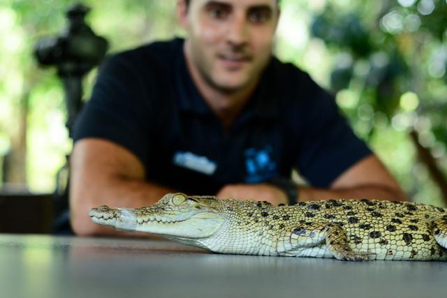 http://media.sbs.com.au/cyclingcentral/upload_media/4629_crocodile2-640-bicknell.jpg