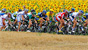 Tour de France and all this year's cycling news
