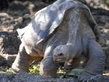 Google captures Galapagos Island beauty