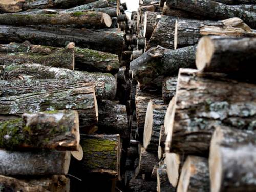 Illegal logging plagues some of the world%u2019s poorest peoples, many of whom live in tropical timber-producing countries. (Getty)