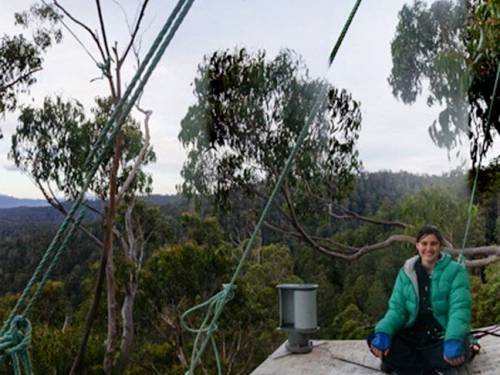 Environmental activist Miranda Gibson will spend her 209th day in the canopy of  Tasmania's Tyenna Valley forest. (AAP)