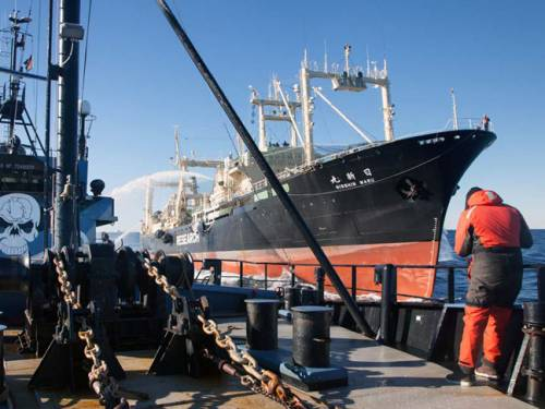 The conservationist group Sea Shepherd says Japanese whalers have left the Southern Ocean. (AAP)