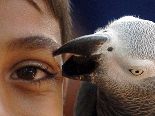 Human children only do as well as the parrots from about the age of three, scientists claim. (Getty Images)