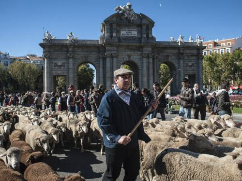Spanish shepherds led a flock of sheep through Madrid in defence of their ancient droving rights. (AAP)