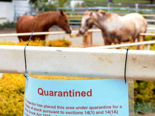 Queensland scientists are reviewing past Hendra virus cases in response to recent outbreaks. (AAP)
