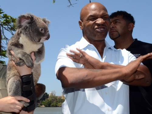 Former boxing champion Mike Tyson refused to touch a Koala during a media call in Brisbane. (AAP)