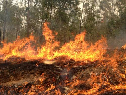 Two firefighters have been killed while battling a large bushfire in Victoria's alpine region. (AAP)