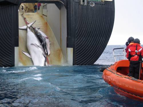 South Korea's backflip on whaling plans is a massive relief, Environment Minister Tony Burke says. (AAP)