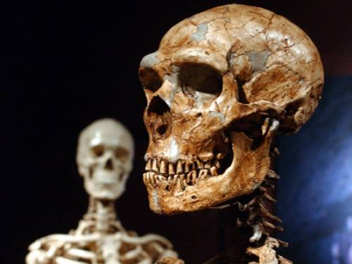 By the time homo erectus emerged around 1.9 million years ago, the skeleton had changed significantly. (AAP)