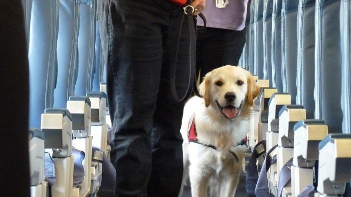 飛機上的狗隻訓練 (Flickr/ Can Do Canines)