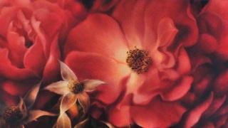 Persian roses