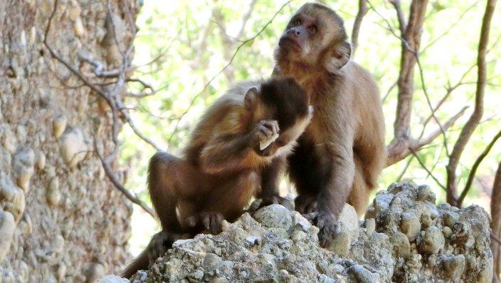 Was machen diese Affen?