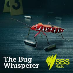 The Bug Whisperer